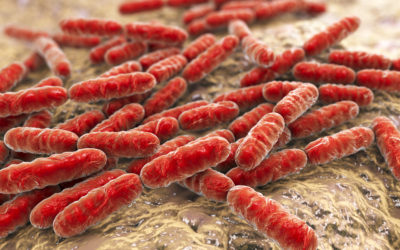 Probiotics for Testosterone: A Stomach Bug for More 'T'?